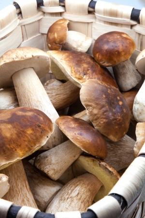eatable: basket with eatable mushrooms, boletus edulis