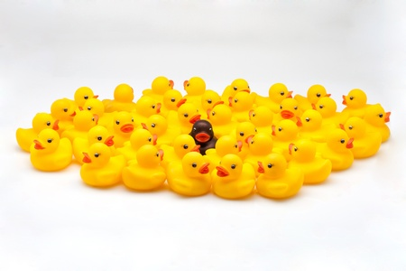 majority: Yellow ducks group and one black in the middle Stock Photo
