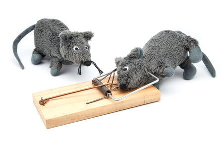Mouse caught in mousetrap against white background photo