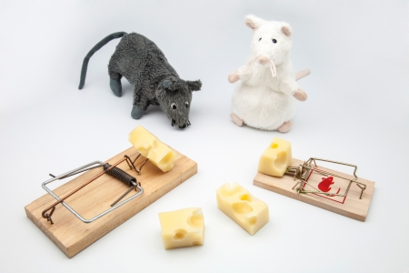 mice and rat-traps with cheese photo