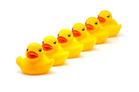 white fund: yellow gum ducks on white fund