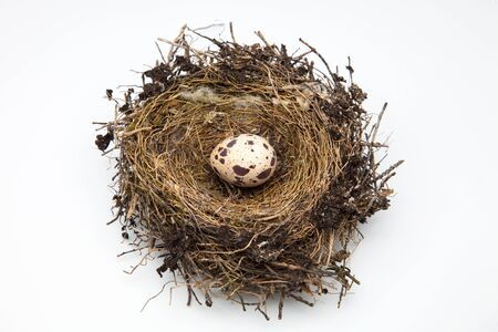 measures white house: egg Bird on a nest of straw