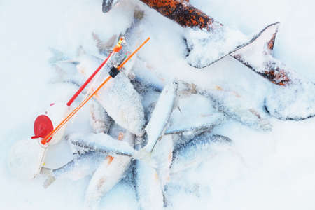 Frozen river fish in the snow and two fishing rods for winter fishing and a rotor.