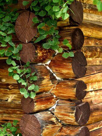encroaching: Old log cabin with encroaching vegetation