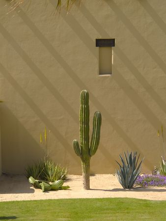 adobe pueblo: Cactus landscaping along stucco wall with shadow lines diagonally Stock Photo