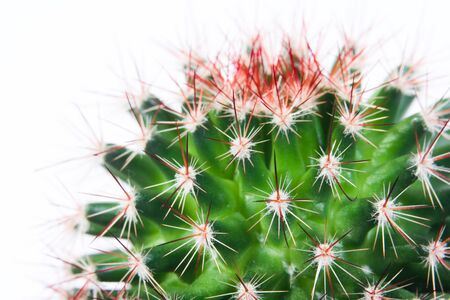 self contained: Small green round shaped cactus with red thorns against white background