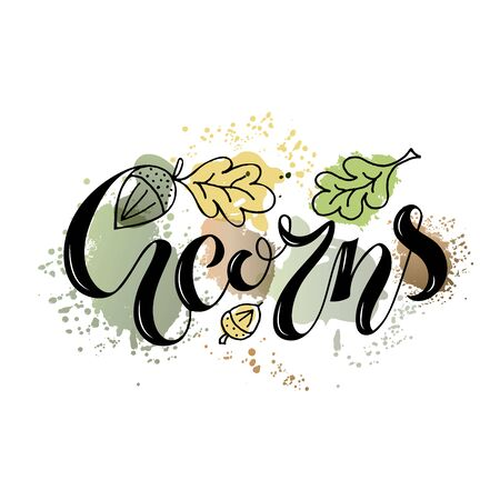 Vector illustration of acorns lettering with oak tree graphics for banner, postcard, poster, clothes, advertisement design. Handwritten text for template, signage, billboard, print. Brush pen writing Illusztráció