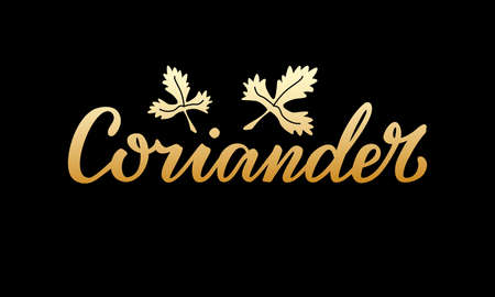 Vector illustration of coriander lettering for packages, product design, banners, stickers, spice shop price list and decoration. Handwritten isolated word with a drawn leaf for web or print