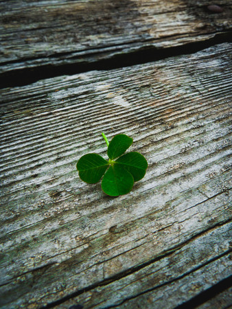 Four leaf clover on a rustic wood background