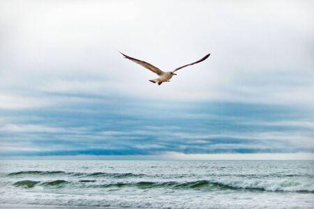 Seagull Flying Oceaan Golven