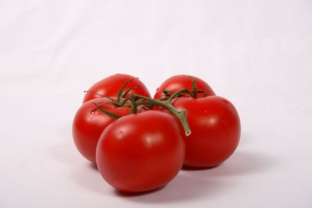 green branch of red big tomato isolated  photo