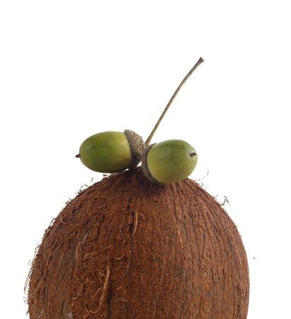 oak fruit over big coco ower white isolated photo