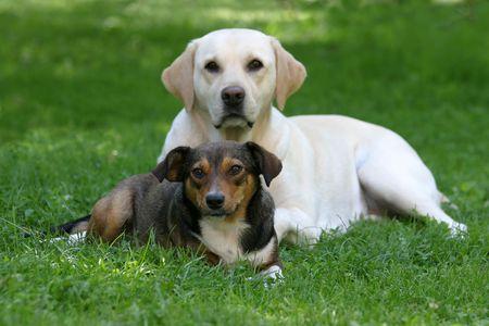 mujer perro: Dos mujeres perro amigos