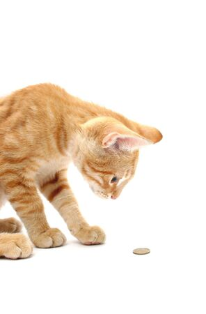 curious cat looking at coin, on white background