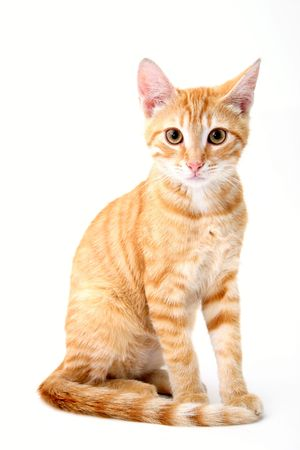 small cat portrait on white background
