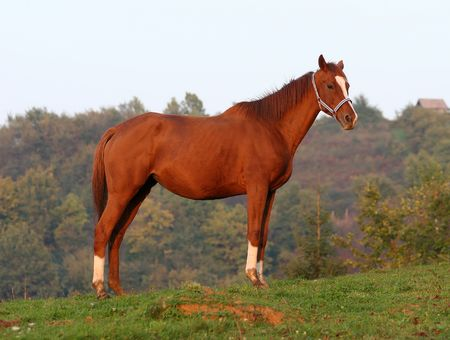 race horse on a hill top Stock Photo