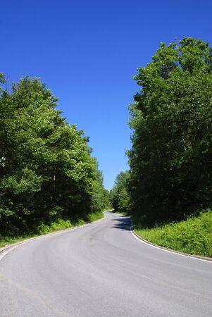 winding tarmac road in forest region, bright blue sky