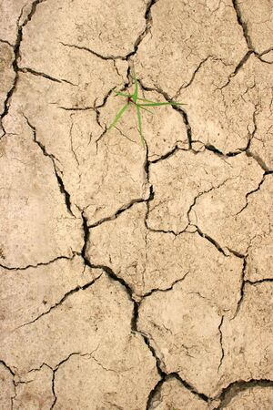 drought caused cracked earth with solitary plant Stock Photo