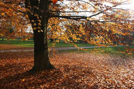 Autumn nature scene Stock Photo - 11270368