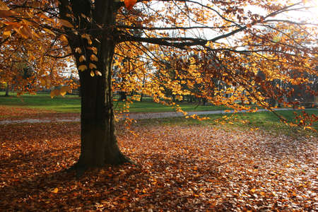 Autumn nature scene