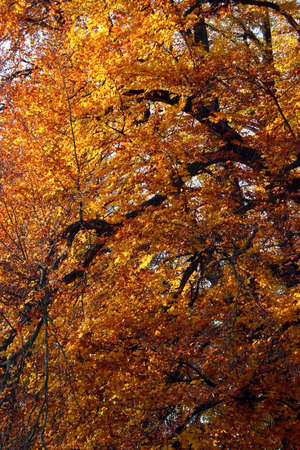 Autumn trees pattern Stock Photo - 11270369