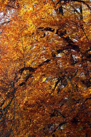 Autumn trees pattern Stock Photo - 11270369