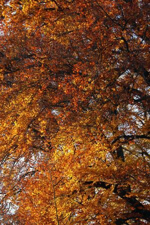 Autumn in park, trees abstract