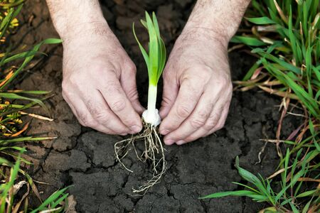 man planting a little plant Stock Photo