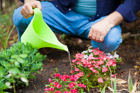 mans hands Watering flowers with a watering can