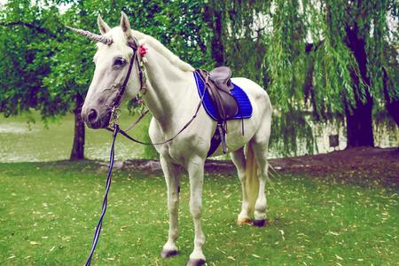 Zeer Paard Verkleed Als Een Eenhoorn Met De Hoorn. Ideeën Voor &AB83