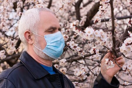 senior man in face mask, sniffing a flowering apricot blossom, breathing of spring flowers during pandemic. Pensioner walking and stroll during world coronavirus epidemic. Elderly risk zone 스톡 콘텐츠