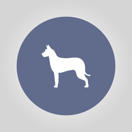 rabies: dog icon. Modern design flat style Illustration