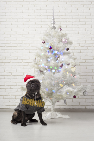 dog. French Bulldog sits near a white Christmas tree with a New Year's inscription on his chest. in christmas hat on brick wall background Stock Photo