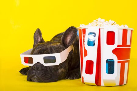 Dog French Bulldog lies in 3d glasses with popcorn. on yellow background close-up portrait. cinema concept