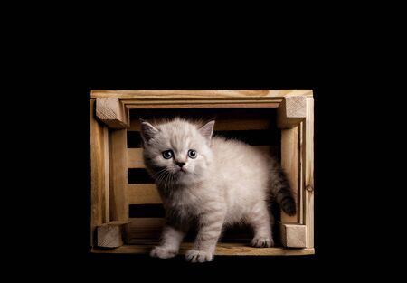 Cute cat in a wood box. cat in a box on a black background in studio Foto de archivo - 134867401