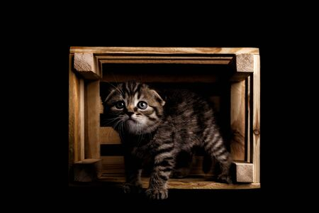 Cute cat in a wood box. cat in a box on a black background in studio Foto de archivo - 134867402
