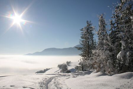 Winter in a forest, trees and snow under sunlight Stock Photo - 2290572