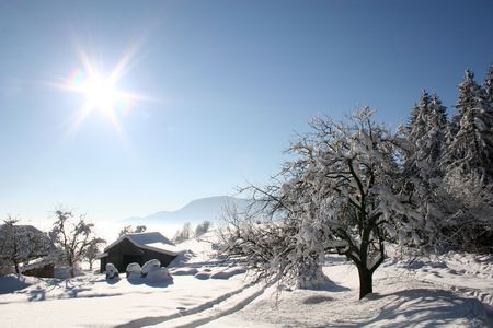 Winter in a forest, trees and snow under sunlight