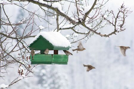 Small bird house at winter time Standard-Bild