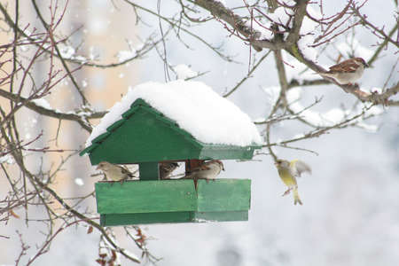 Small bird house at winter time photo