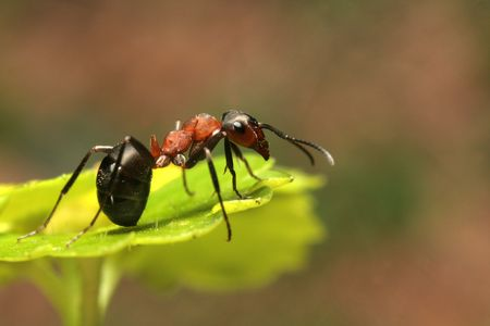 Close up of ant on a leaf