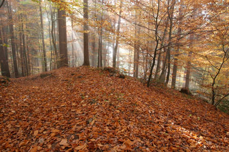 Beautiful autumn colors in the forest - Fall photo