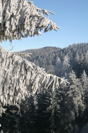 Winter in a forest, trees and snow photo