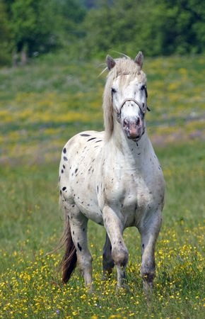 rein: Beautiful Horse Stock Photo