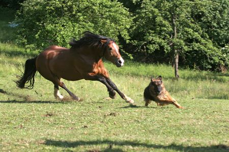 Beautiful Horse and Dog