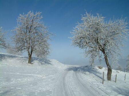 Beautiful Winter photo