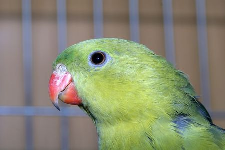 Head of green macaw parrot photo