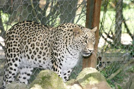 Leopard Stock Photo - 2649867