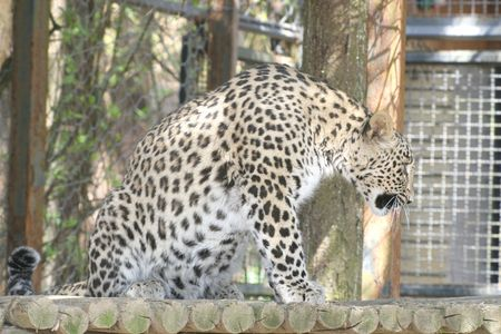 Leopard Stock Photo - 2651021
