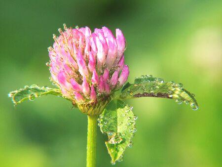 Flower Stock Photo - 2687748